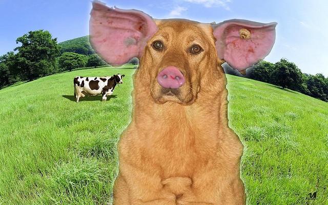 Schweinehund - www.selbstbewusster.info